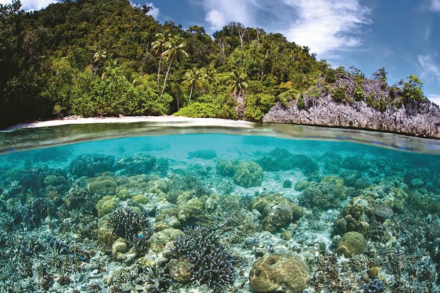 Destaca México en protección de ecosistemas