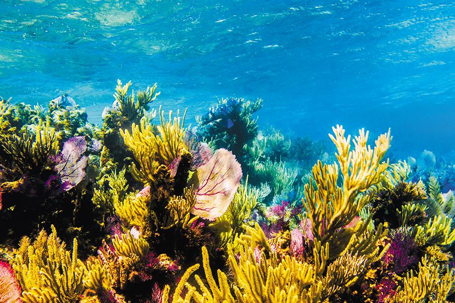Mejora conservación de arrecifes