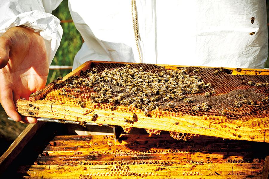 México es líder en producción de miel