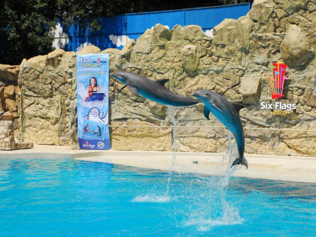 Sexto aniversario Dolphin Discovery Six Flags