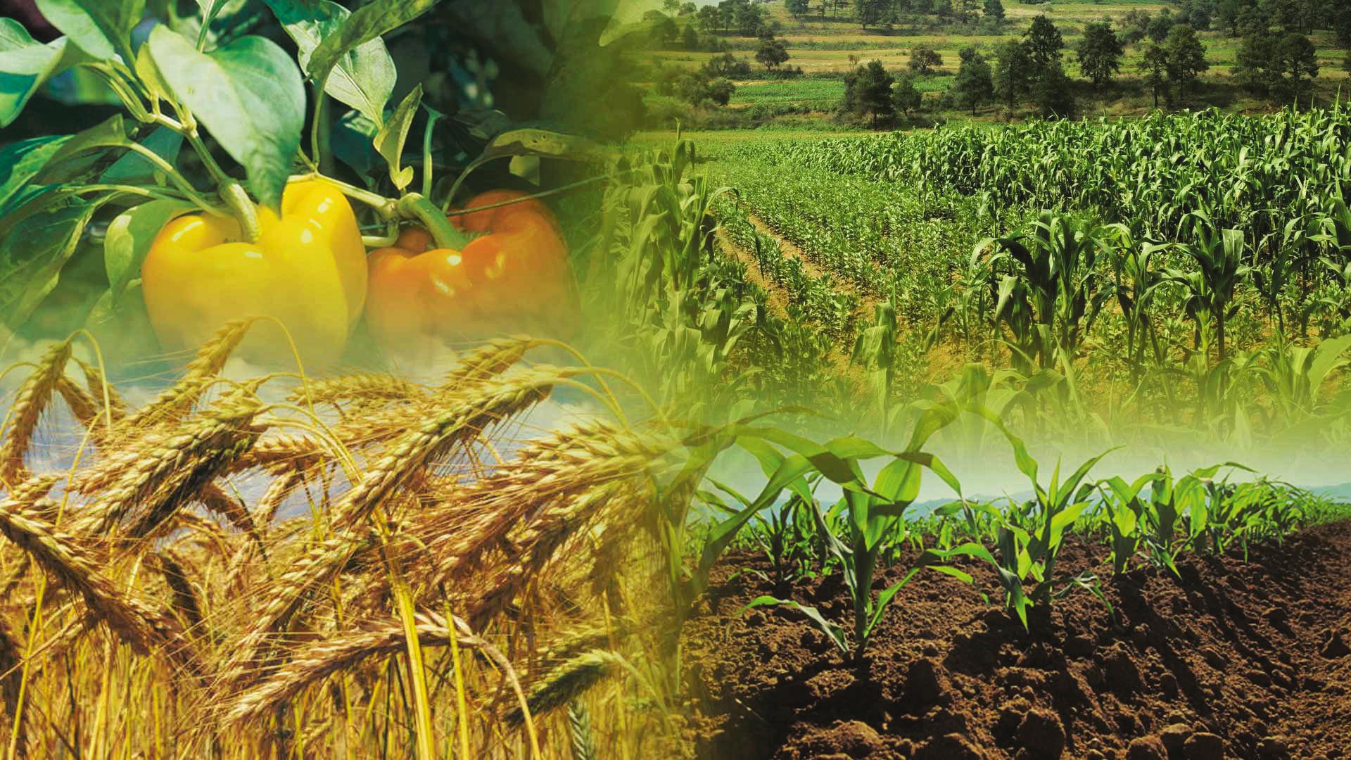 Cargill invierte en el campo mexicano