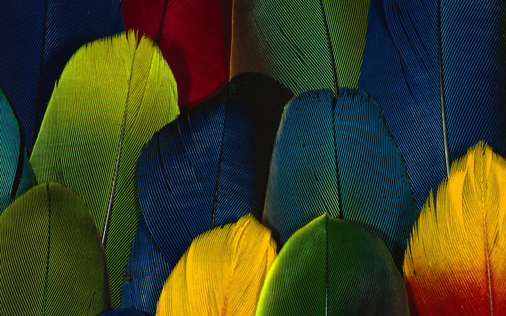 III Festival Internacional del Colibrí y Aves de Guanajuato 2015