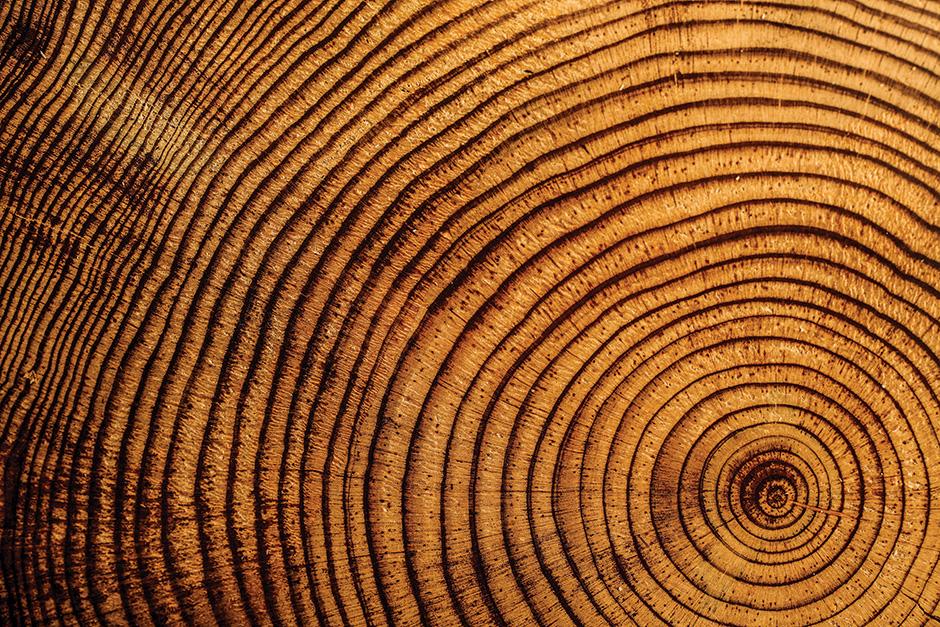 Investigan anillos de árboles en la Ciudad de México