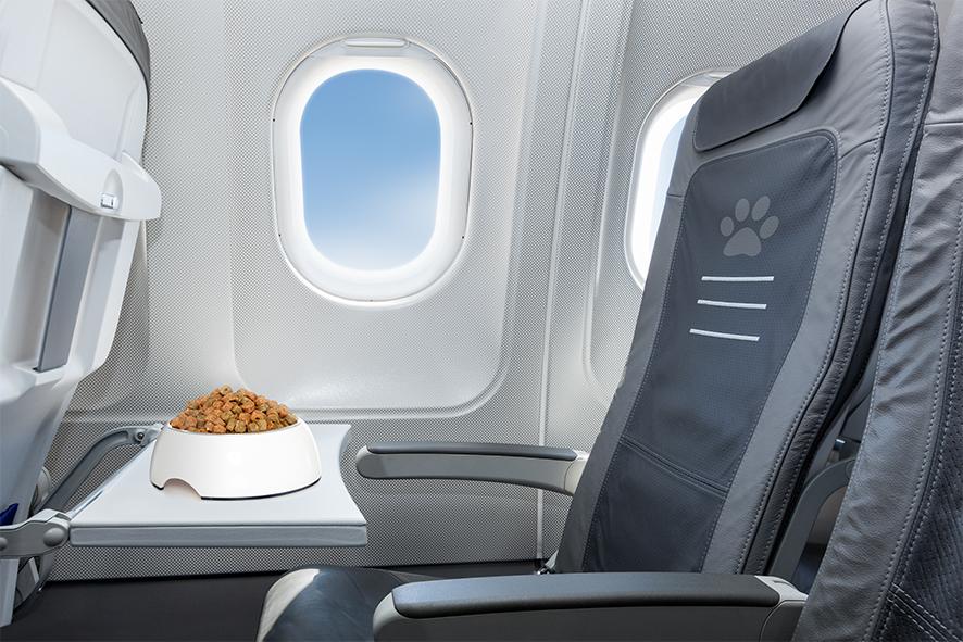 Requisitos para viajar en avión con mascotas