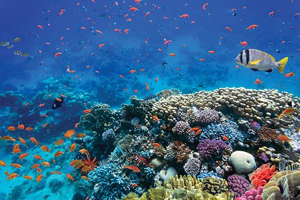 COP21 a favor de la sustentabilidad de los océanos