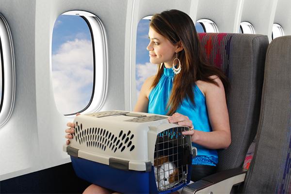 Los controles sanitarios al viajar con mascota