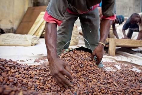 La labor de Nestlé Cocoa Plan que debemos conocer