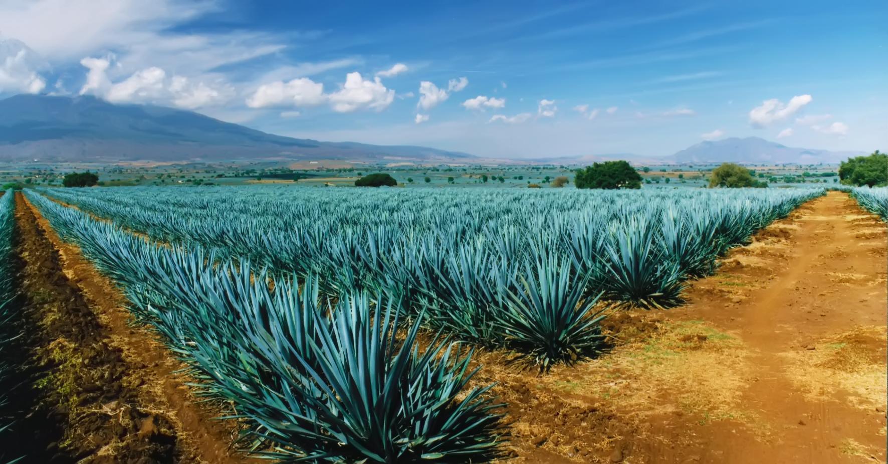 Las principales actividades en Jalisco