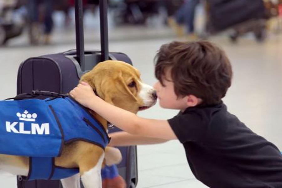 Las mascotas amaran viajar