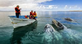 Avistamiento de ballenas en BCS
