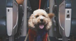 """La nueva tripulación canina de Virgin Australia fue el mejor """"April Fools"""" de este año"""