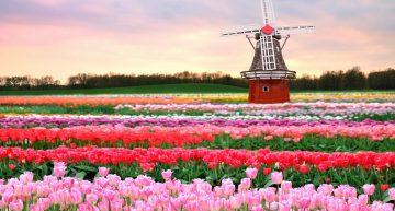 Los campos de flores más espectaculares