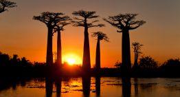 Conoce la isla de Madagascar