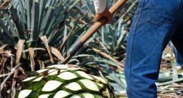 Arandas, un lugar para los amantes del tequila