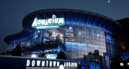 Conoce el Downtown Aquarium en Houston