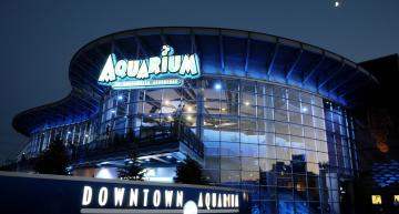 Conoce el Downtown Aquarium en Houston
