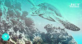 Aventuras submarinas en Islas Caimán