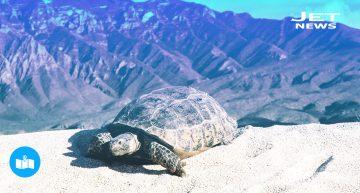 Coahuila, cuatro maravillas al norte de México