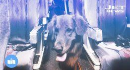 Animales a bordo de tu avión